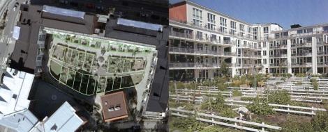 Alcune corti sono organizzate con orti coltivati dagli abitanti ( googlemap immagine planimetrica e immagine dell'orto in l'Industria delle costruzioni n. 419 )