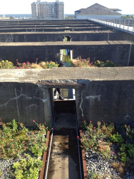07. Saint-Nazaire, il Jardin du Tiers Paysage progettato da Gilles Clément per il tetto della ex base dei sottomarini.